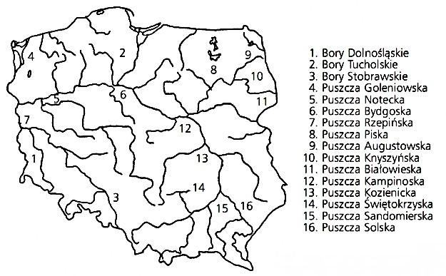 Rozmieszczenie głównych kompleksów leśnych-OPRACOWANIA.PL