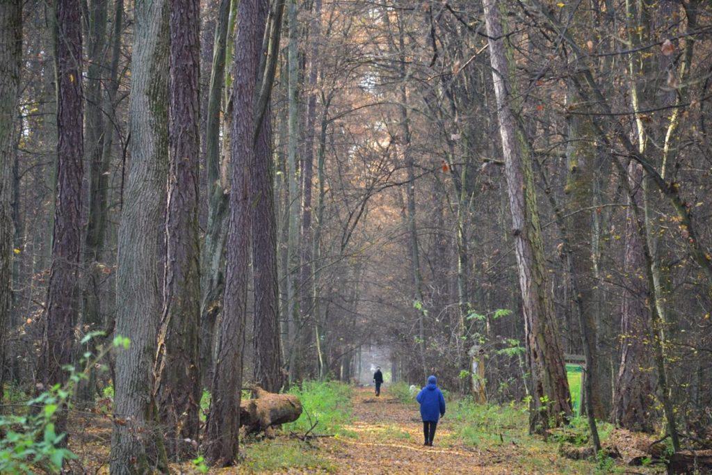 Szeroka aleja pozwala odczuć potęgę drzew
