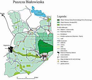 Białowieski Park Narodowy na tle Puszczy. Pozostała część to lasy gospodarcze Nadleśnictw Białowieża, Browsk, Hajnówka w których nie odnotowano strat przyrodniczych do czasu podjęcia działań wyniszczających gospodarstwo leśne.