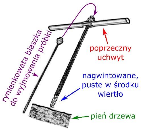 Świder presslera_aspress_Od dendrochronologii do dat_ - http___www.aspress.com.pl_datowanie