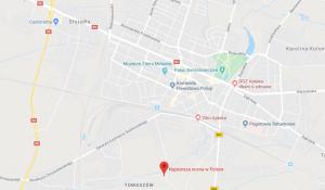 Najstarsza sosna w Polsce Mińsk Mazowiecki – Mapy Google
