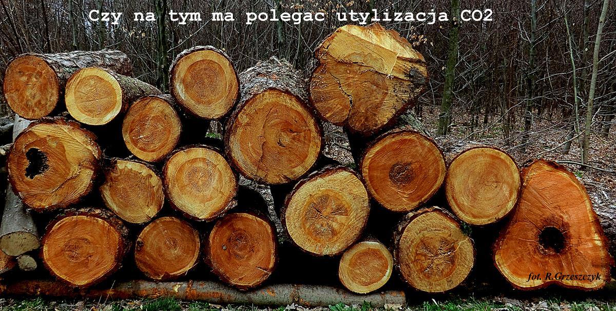 Zasoby leśne Polski, Polaków rozkładajace się na pniu w imię ideologii ekologizmu i samorództwa