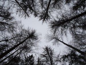 Zdewastowany drzewostan świerkowy - przyczynek do pozycji kornika w LP i RPIII...