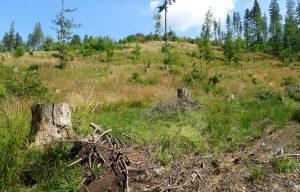 Utrata lasu, to nie tylko niekontrolowana strata powierzchniowa drzew w znacznym rozmiarze