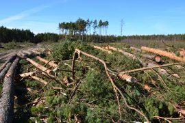 Gazeta Wyborcza - Obywatelu wytnij swój las