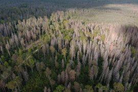 Rozpad Lasu w Puszczy